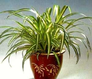 Кімнатні рослини можуть забруднити