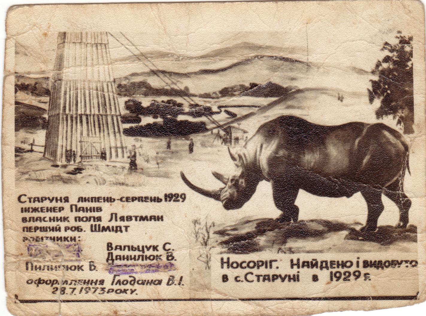Носоріг.Знайдео в с. Старуня в 1929 році