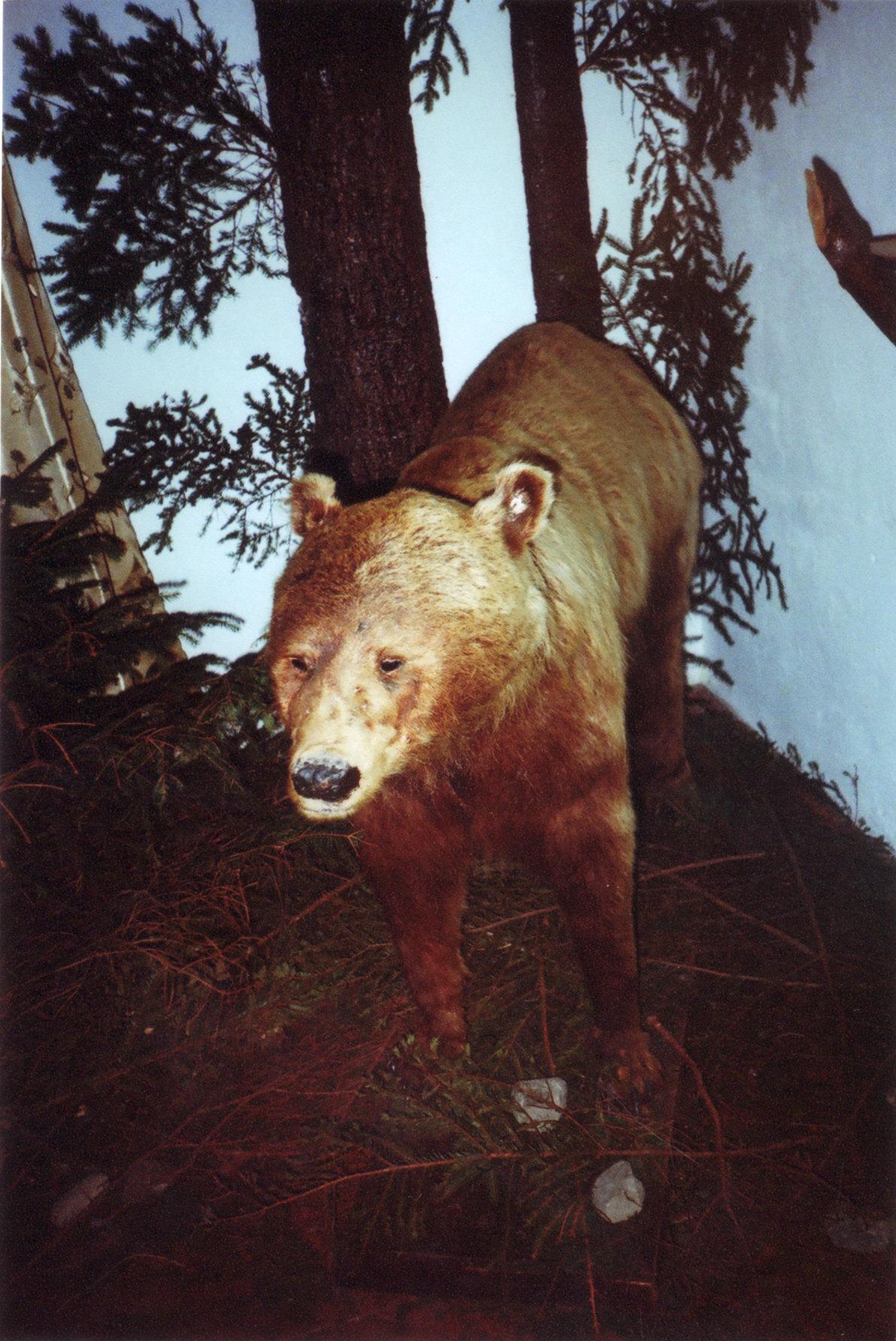 Музей Ведмедя