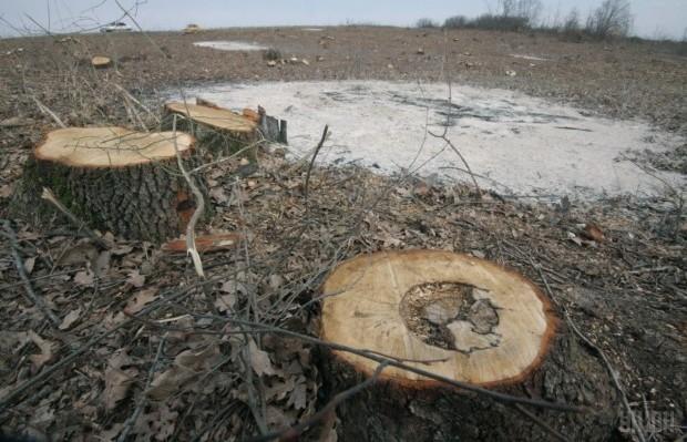 В Україні заборонили санітарну вирубку дерев у заповідних зонах