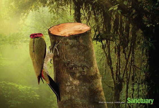 Вырубка лесов убивает жизнь: социальная реклама в защиту животных и природы